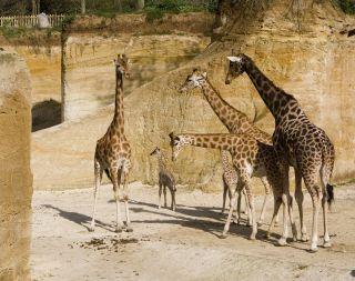Bioparque- Zoo de Doué-la-Fontaine