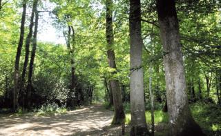 Les Chemins du Charbon de Bois - 10 km