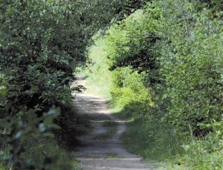 Chemin de Chêne enragé et Rond des Dames - 5 km
