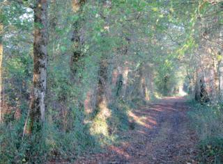 Les Coquelicots - 11 km