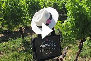 Route des vins - Vignoble et Patrimoine du Haut-Layon