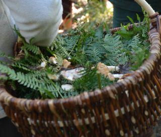 Rencontre Végénature Questions pour un... champignon