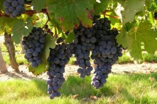Winegrowers