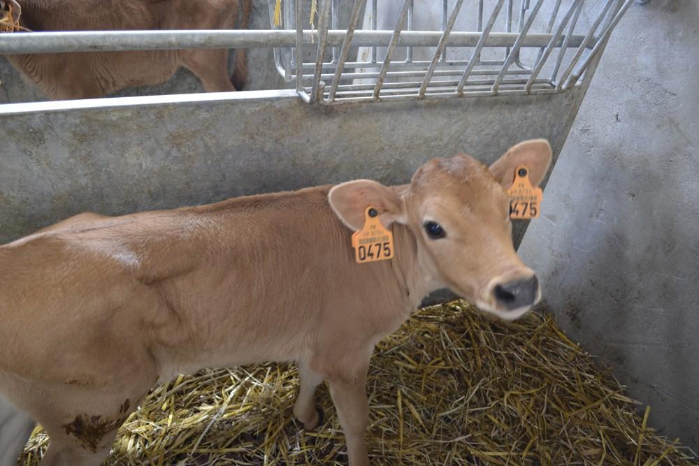 09-on-va-voir-les-vaches-1235