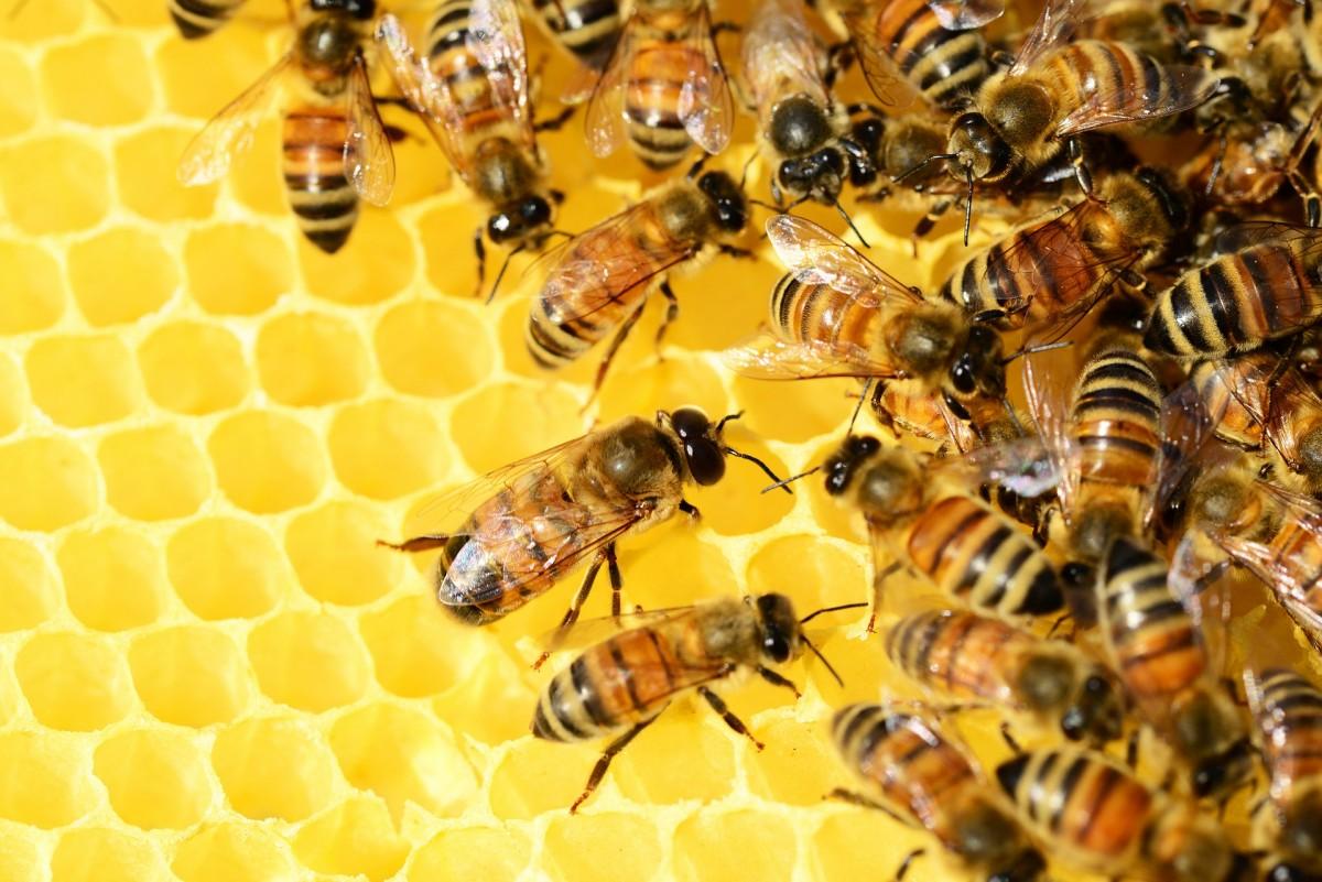 31-miel-abeilles-1260