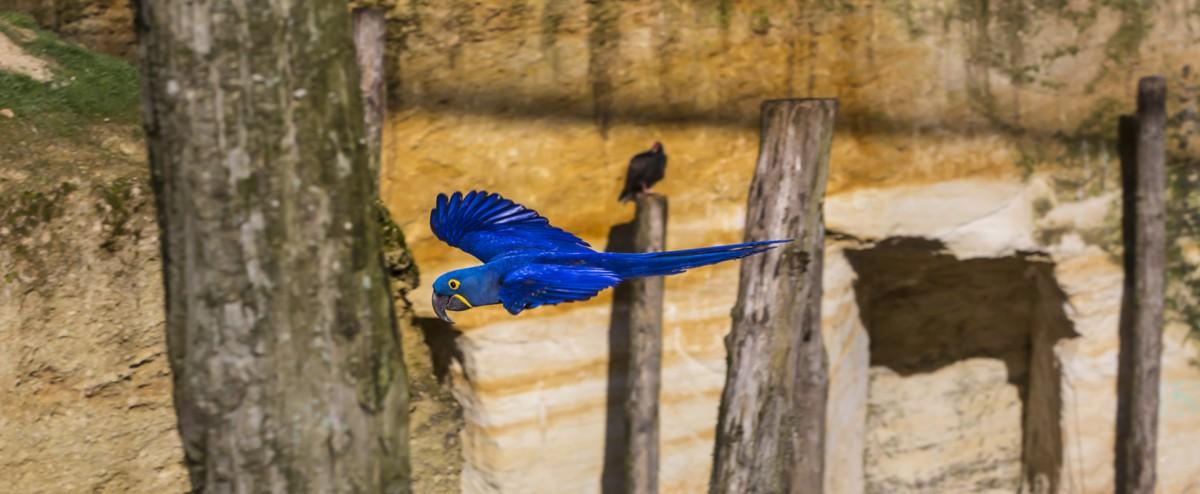 actu-parcs-animaliers-2016-2-768