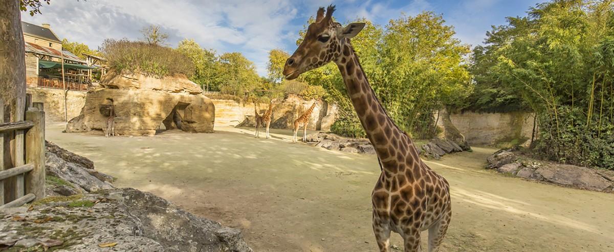 actu-parcs-animaliers-2018-1501