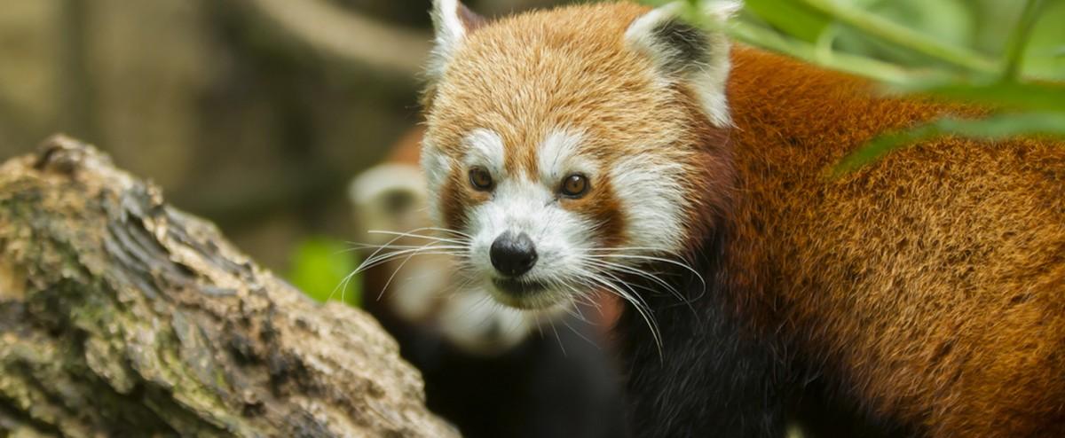Cholet tourisme bioparc doué la fontaine zoo site troglodyte