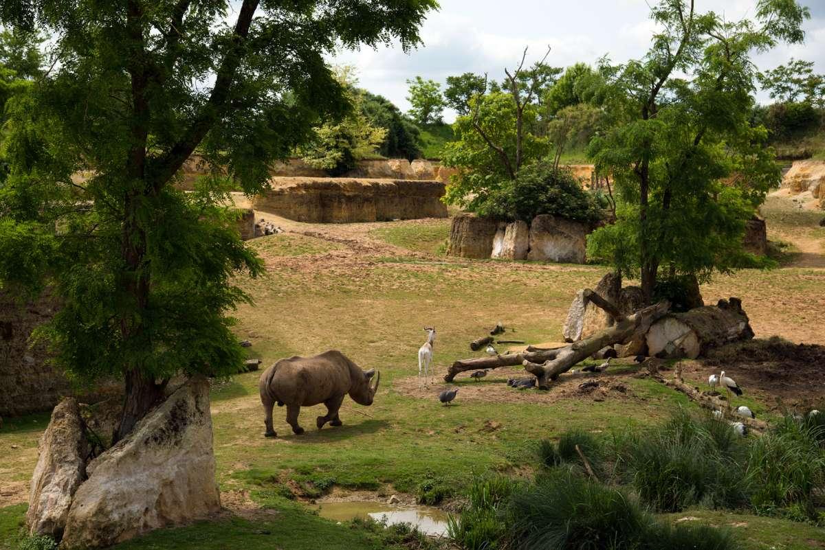 Cholet tourisme bioparc zoo doué la fontaine troglodytique