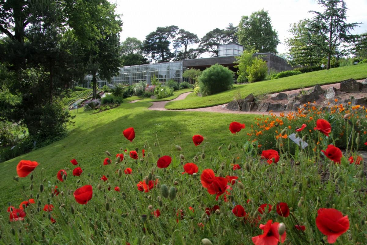 Box jardins extraordinaires office de tourisme du choletais for Jardin japonais cholet