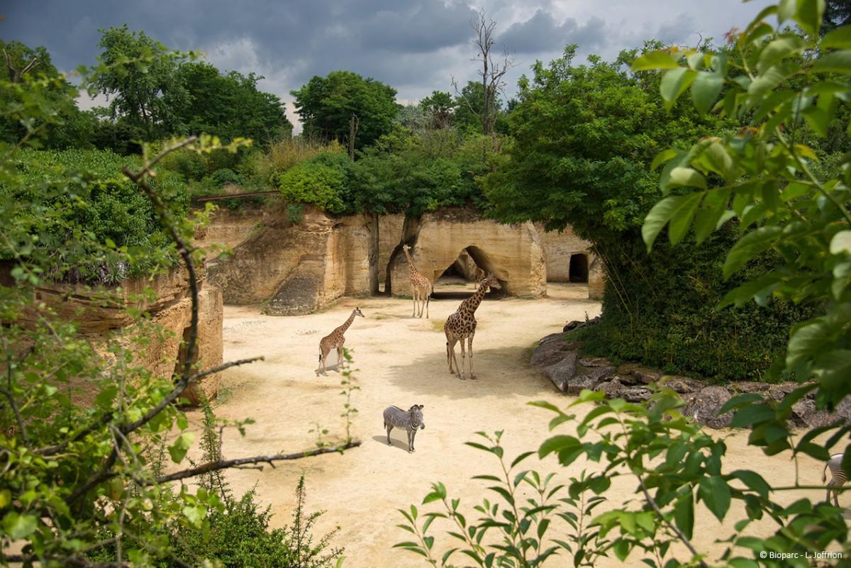 Bioparc De Dou 233 La Fontaine Office De Tourisme Du Choletais