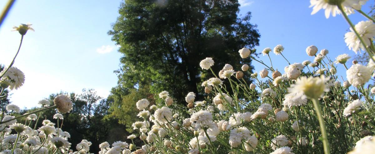 Cholet tourisme jardin de plantes aromatiques et médicinales camifolia chemillé