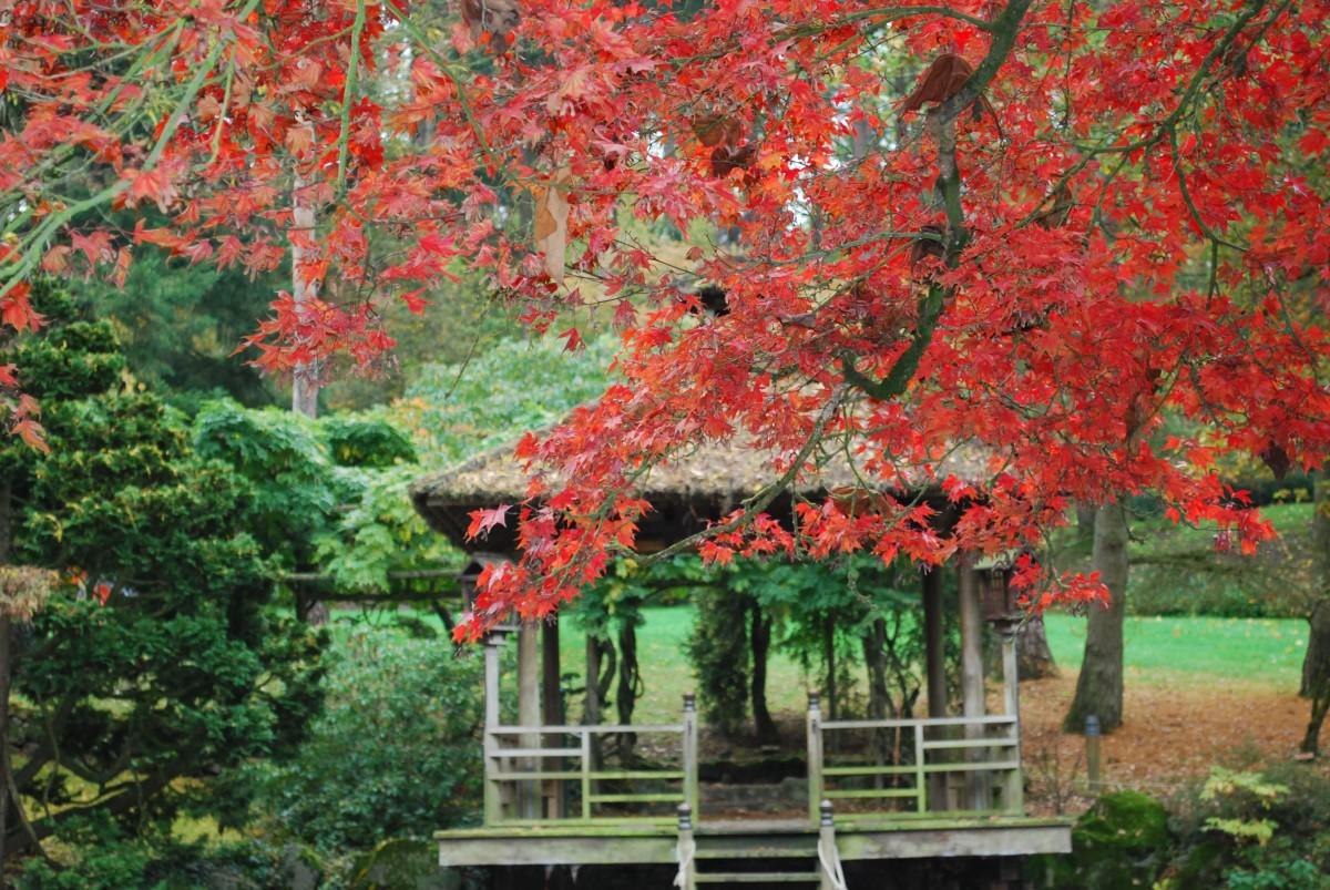 parc-oriental-automne-serge-cousseau-16-988
