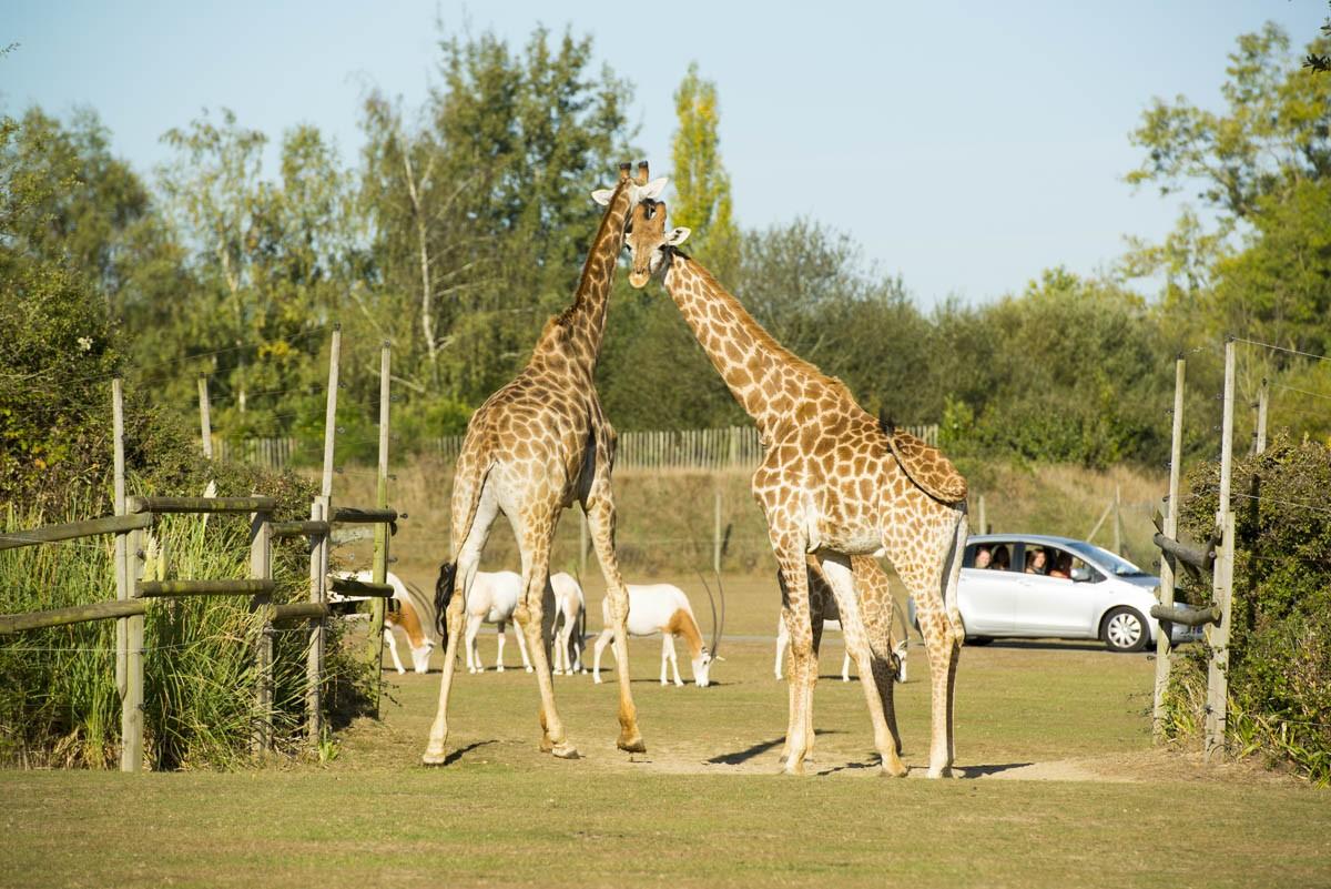 Cholet tourisme planete sauvage port saint pere safari africain