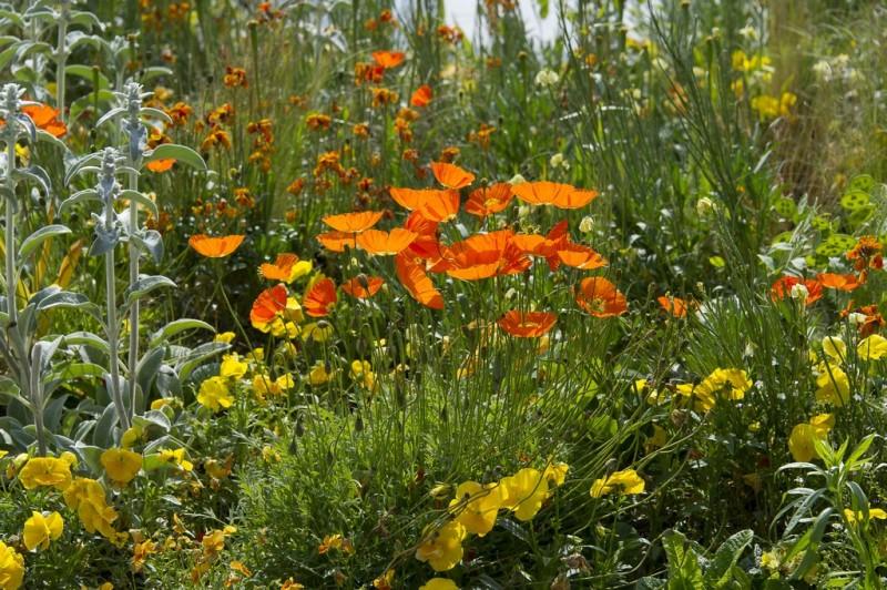 Cholet tourisme nature parc jardin ville fleurie 4 fleurs