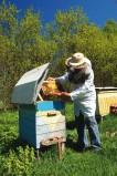 apiculteur22-1198876