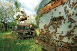 apiculteur3-1198877