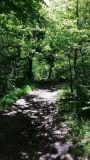 Cholet tourisme lieux de visite nature péronne étang massif forestier de Nuaillé Chanteloup les Bois espace naturel randonnée pêche