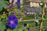 potager-du-chateau-colbert-maulévrier-49