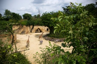 camp-des-girafes-bioparc-2374635