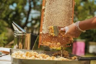 la-ruche-de-mary-famille-mary-st-andre-de-la-marche-49