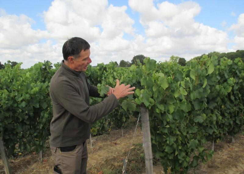 Cholet Tourisme Vigneron Oenotourisme Château de Brossay Vignes Viticulture