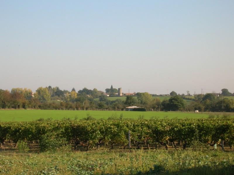 Cholet Tourisme Randonnée Pédestre Le Voide Nature Campagne Vignes Paysage