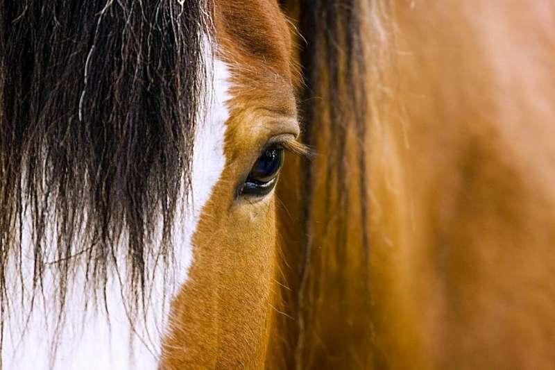 ecole-d-attelage-et-ferme-equestre-la-caleche-la-plaine-49