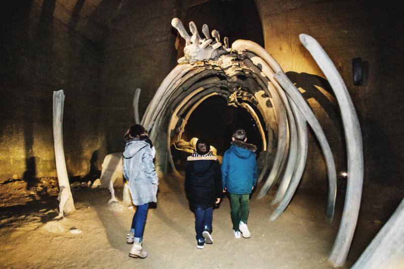 Cholet Tourisme Le Mystère des Faluns Doué la Fontaine 49