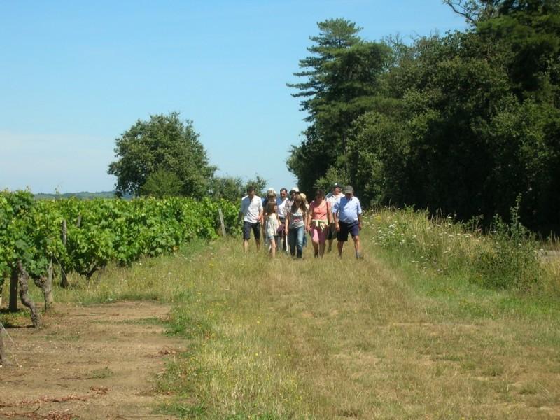 Cholet Tourisme Randonnée Pédestre Nueil--sur-Layon Vignes