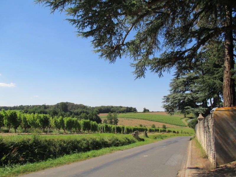 Cholet Tourisme Route des Vins Vignoble Patrimoine Haut-Layon