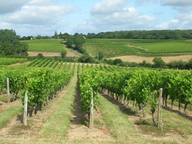 Cholet Tourisme Randonnée Pédestre Vignes Trémont