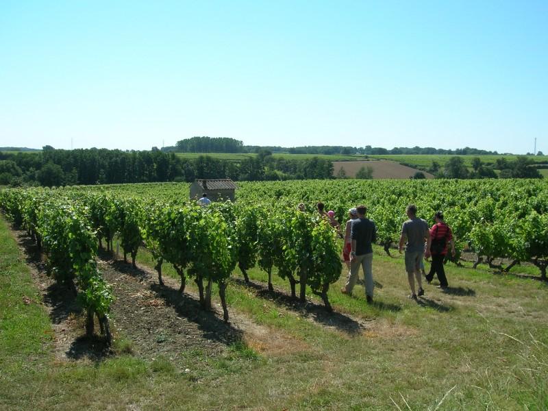 Cholet Tourisme Vigne Vignoble Viticulture Oenotourisme La Fosse-de-Tigné
