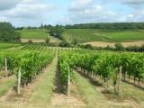 balade-dans-les-vignes-2012-tremont-49-3-258050