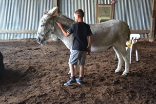Atelier-Médiation-animale-et-art-thérapie-le-may-sur-evre-49