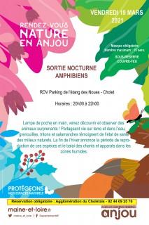 rdv-nature-en-anjou-sortie-nocturne-amphibiens