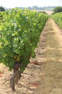 Visite : Balade dans les vignes au Château de Brossay