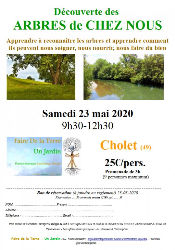 decouverte-arbre-de-chez-nous-cholet-49-476264