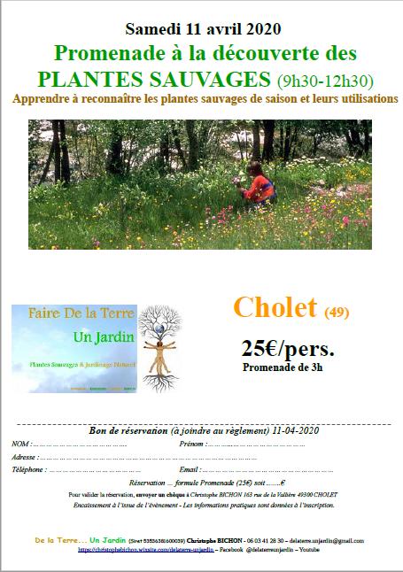 affiche manifestation Promenade à la découverte des plantes sauvages Cholet